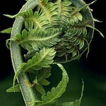 greenmandala